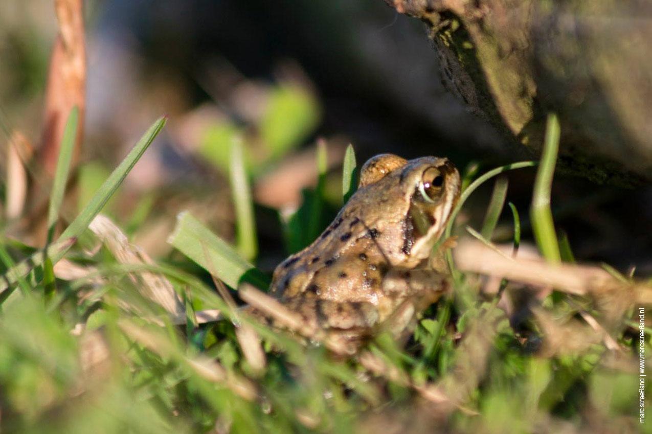 frog-slides-1275-849