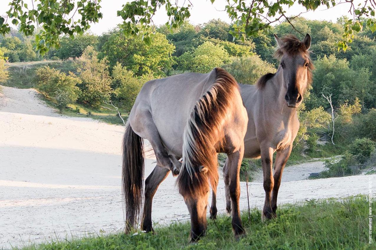horsies-slides-1275-849