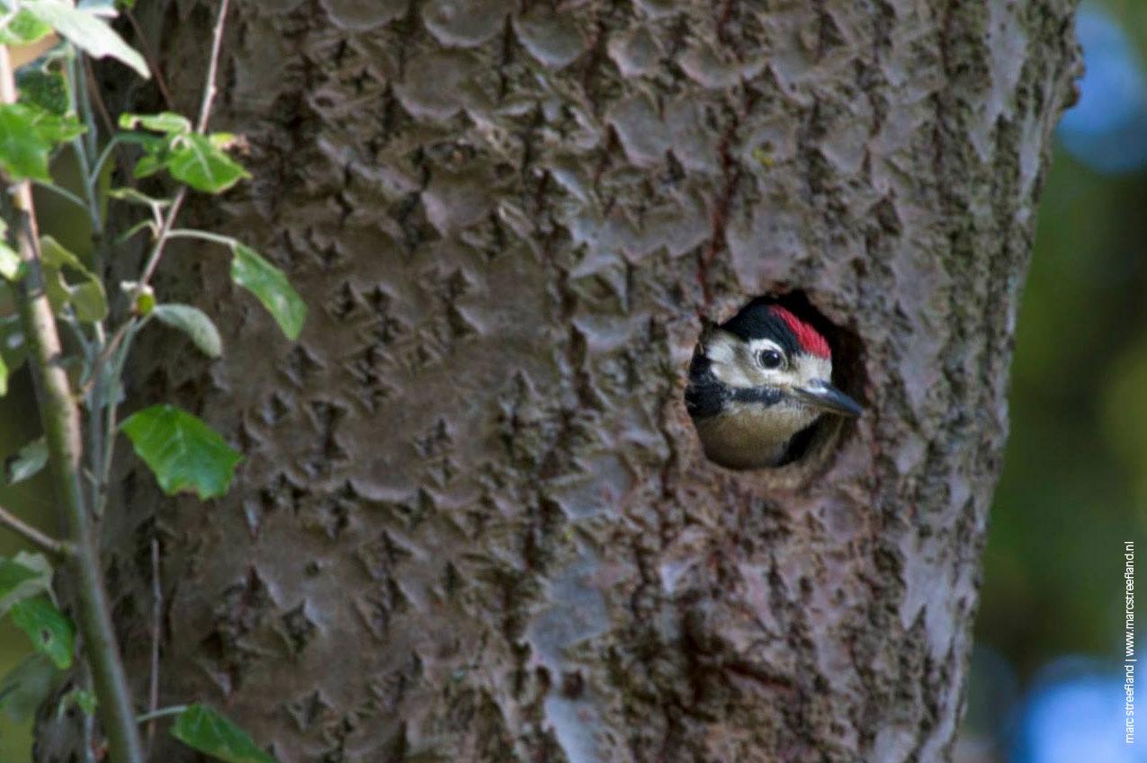 woodpecker-slides-1275-849