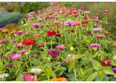 7-8-14-13-wildflowerz