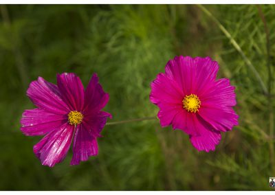 7-8-14-5-pink-twins
