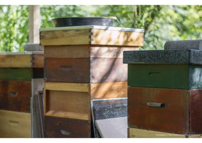 bee-boxes-15-6