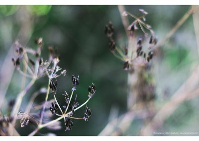 black-flower-15-6