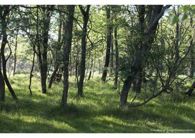 forest-meijendel-18-5-2014