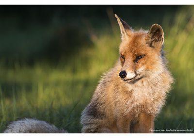 fox-essence-01-06-2014