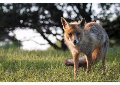 fox-sun-01-06-2014