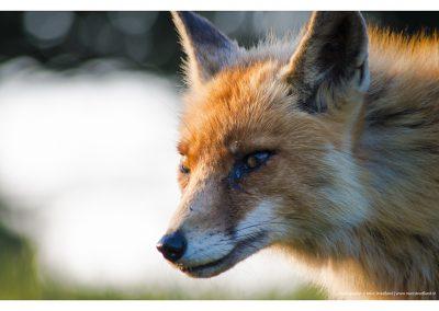 fox-sun-01-06-2014-l