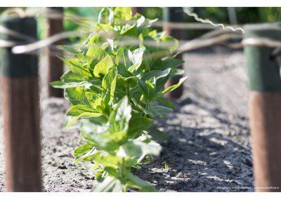 green-plants-14-6