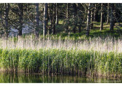 long-grass-water-01-06-2014