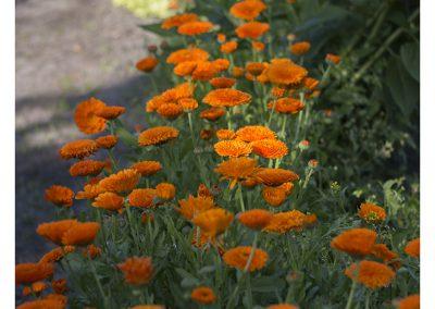 orange-field-15-6