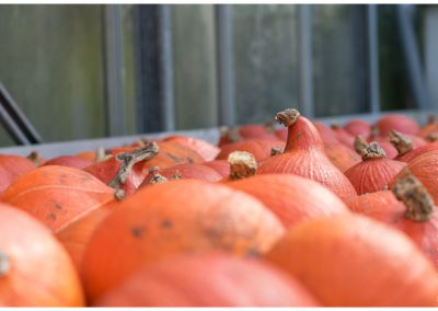 pumpkins-orange-www-marcstreefland-nl