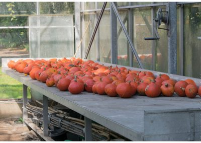 pumpkins-table-www-marcstreefland-nl