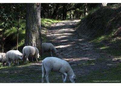 sheep-hill-01-06-2014