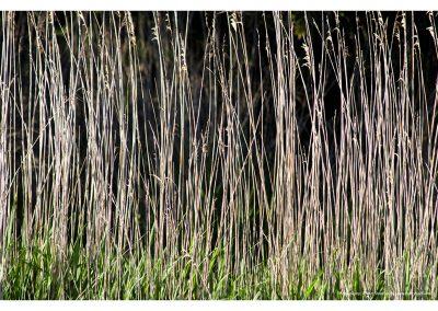 tall-grass-01-06-2014