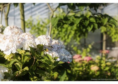 white-flowers-15-6